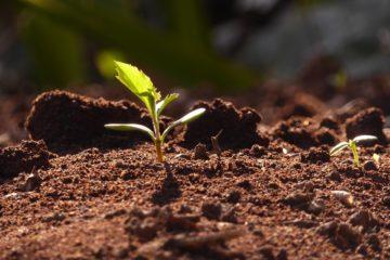Costruire un orto