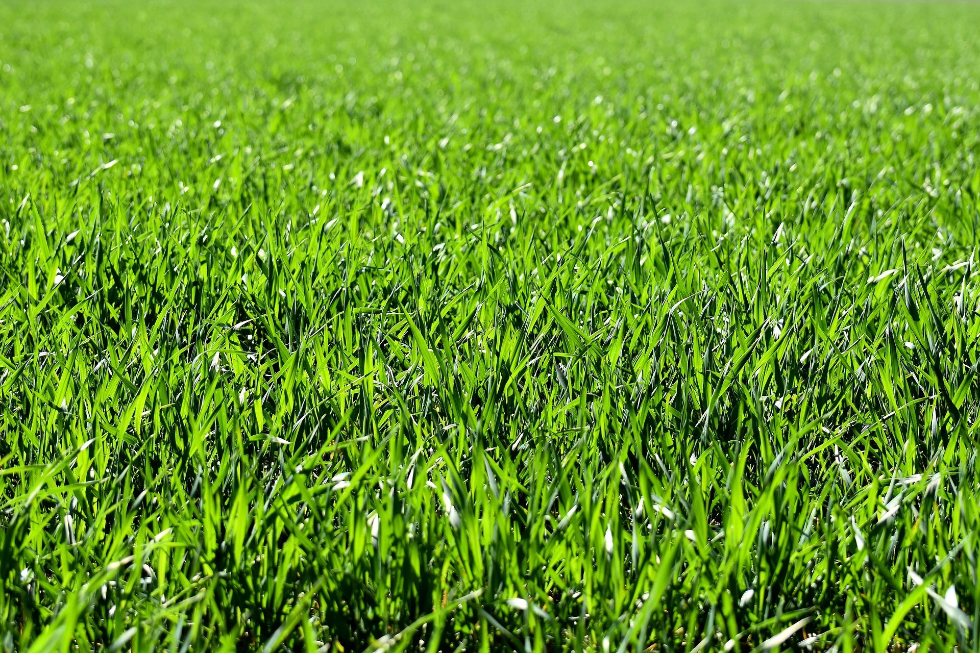 Tipi di erba da giardino affitto giardino - Diversi tipi di erba ...
