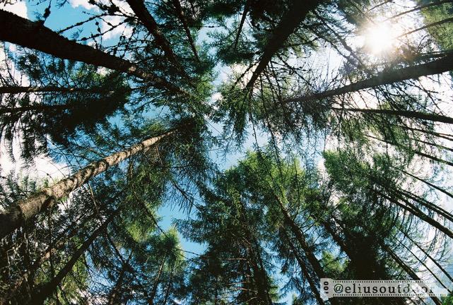 quali alberi piantare in giardino affitto giardino