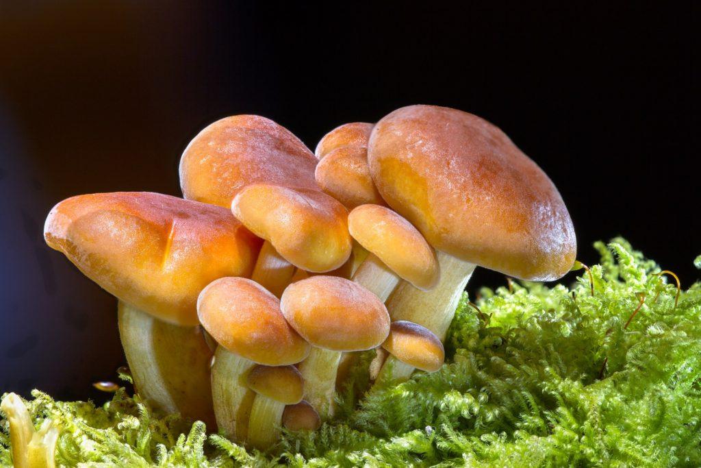 Dove trovare funghi