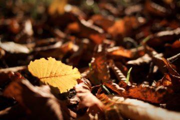 Come preparare il giardino per l'autunno