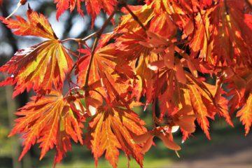 Trapiantare le piante d'autunno